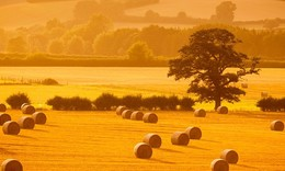 The Growth of Big Data in the Agricultural Sector