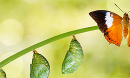 What Are The Four Rare Opportunities To Create Transformational Change?