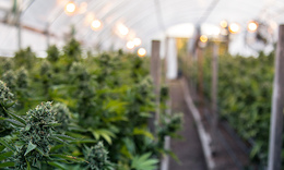 Corona invests $3.8bn in Canadian cannabis firm